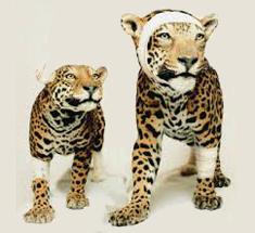 ANIMALS – a different percepition – PASCAL BERNIER