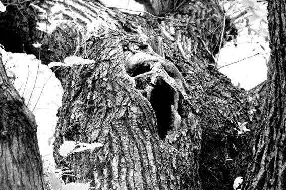 In mostra le foto del legno – Pareidolia e Immaginario di Roberto Bertiond