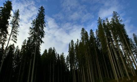 A Torino gli alberi cammineranno per 58 minuti. Li accompagna CinemAmbiente fino al Massimo.