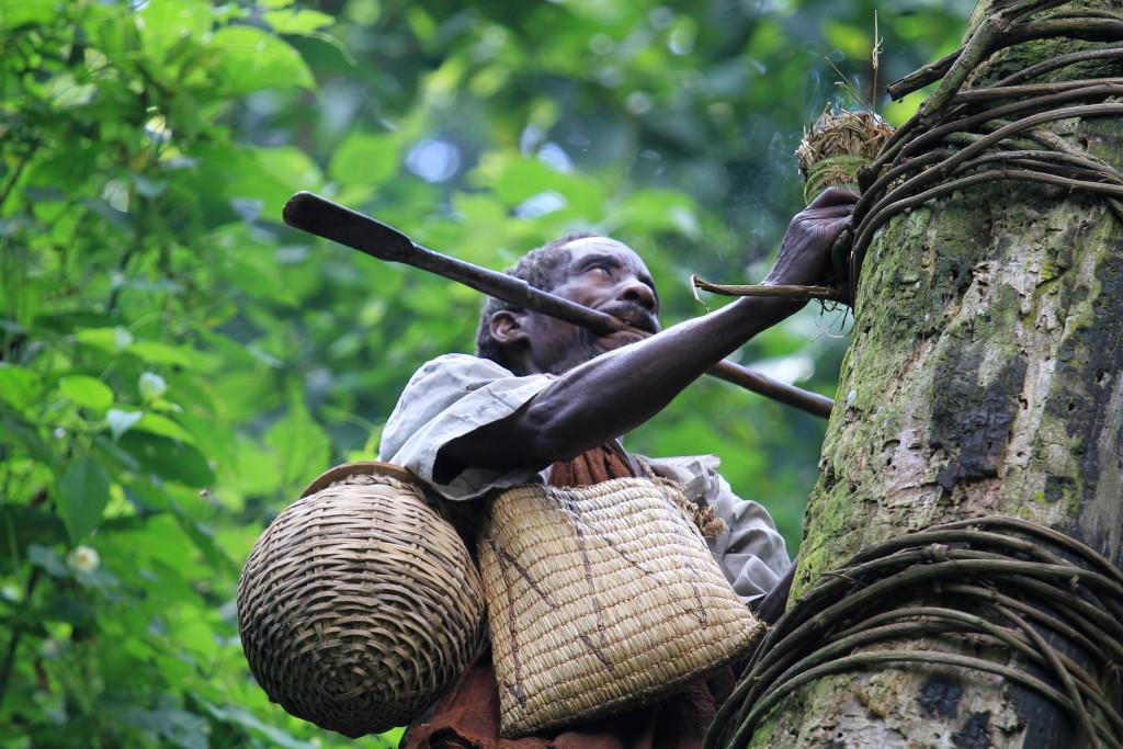 image002-Uomo Batwa durante la raccolta del miele