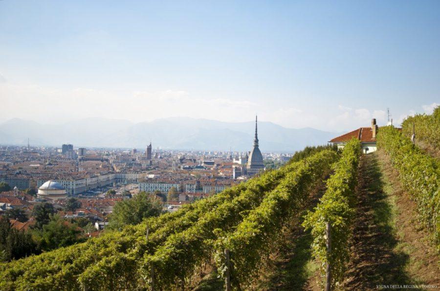 Vendemmia a Torino torna a riempire i palazzi storici e le strade come calici.