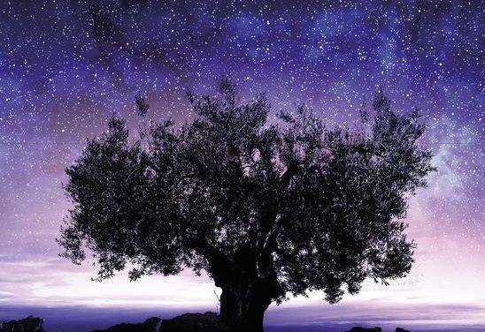 Il discorso delle stelle di Antonio Rubino. Romanzo tra astronomia e destino.